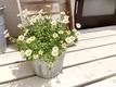 お花のご紹介❀