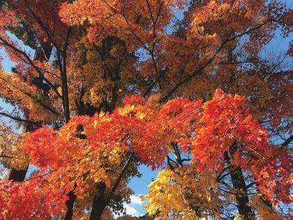 紅葉と寒牡丹。
