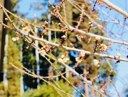 春も間近?